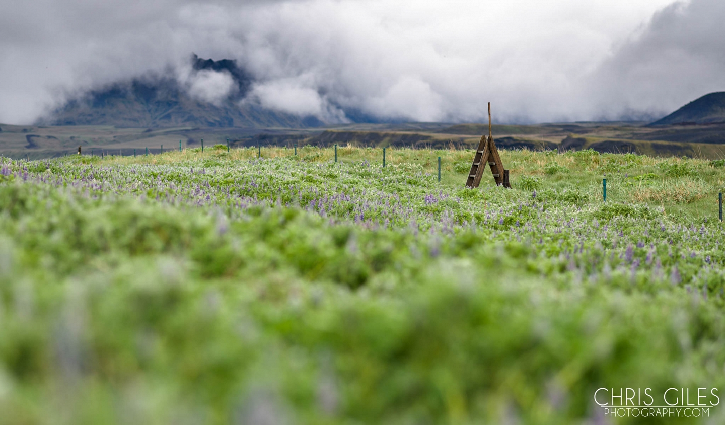 Fields of Lupins can be found everywhere, but mainly in the south.